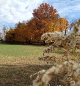 Jersey Fall
