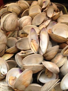 cooked clams in dish