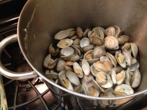 cooked clams in pot