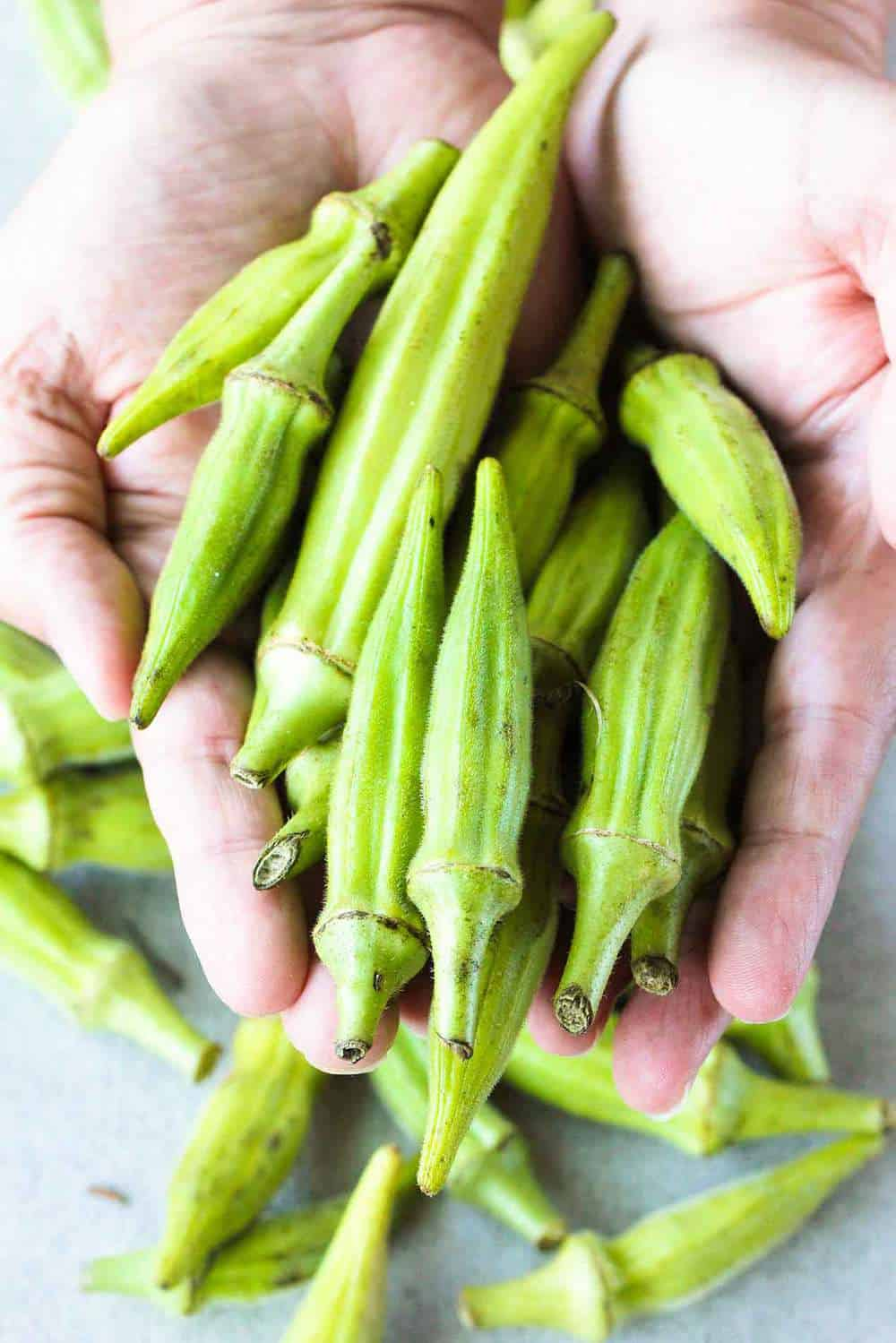 fresh okra held by two hands