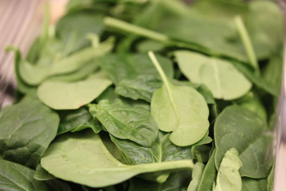 Use baby spinach for chicken florentine...it's the best!