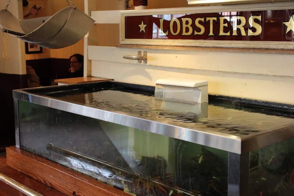 The amazing UOH lobster tank