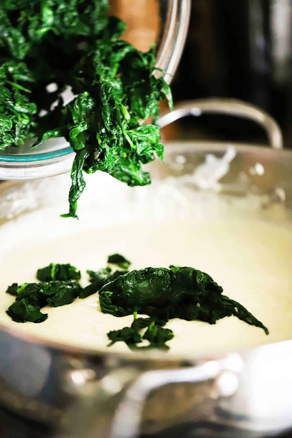 Blanched spinach leaves being dropped from a bowl into a skillet fillet with bechamel sauce.