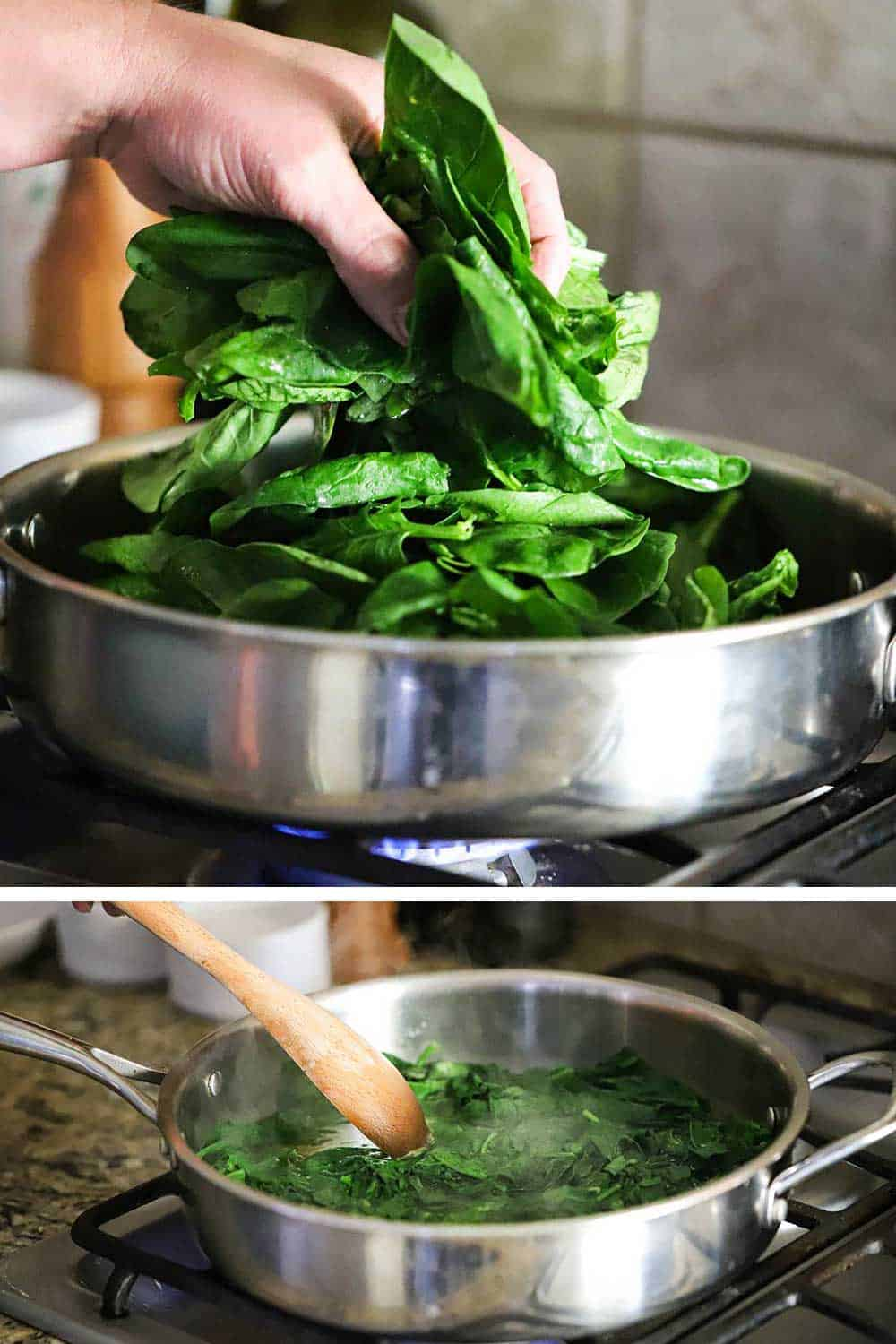 A hand dropping fresh spinach leaves into a skillet an then those leaves cooked down after being blanched.