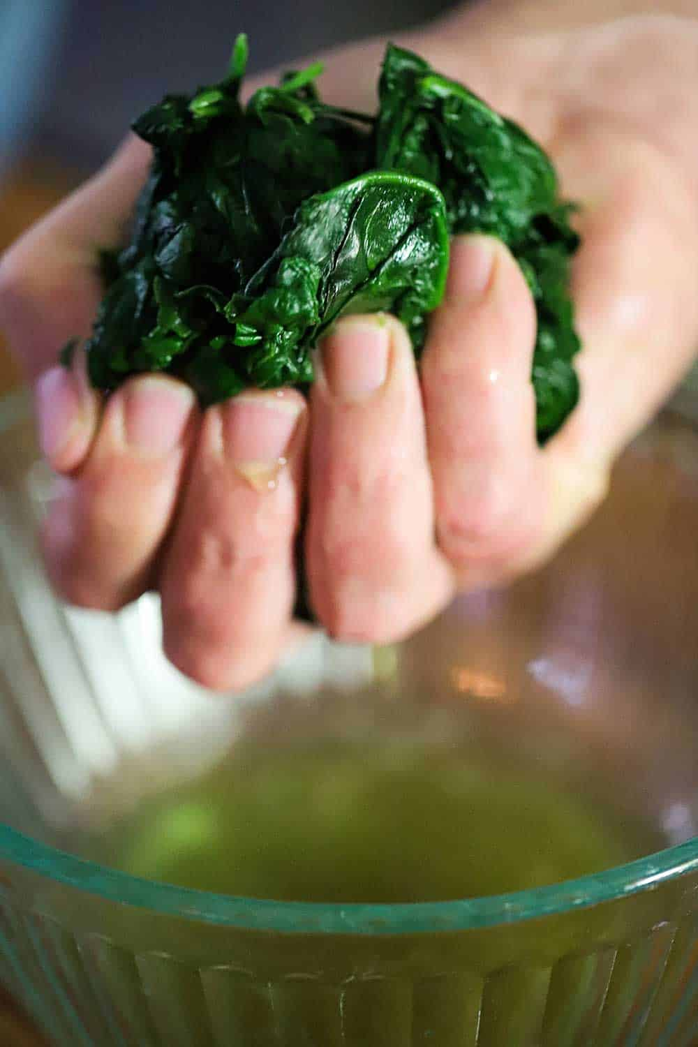 A hand squeezing excess water from a handful of blanched spinach leaves.