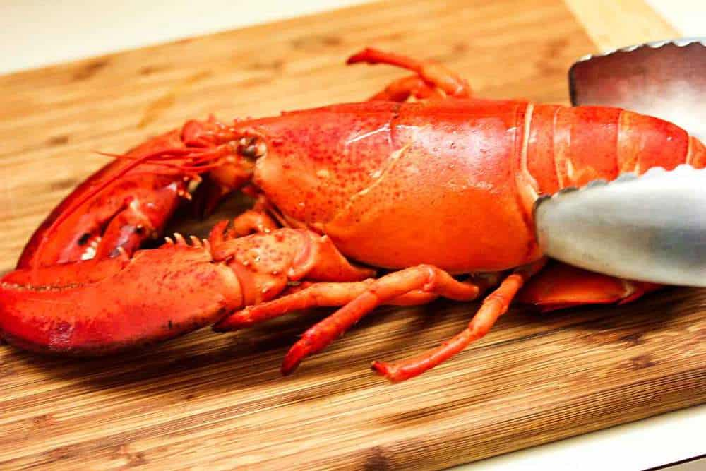 A bright red freshly steamed lobster for a lobster roll.