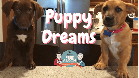 Weekend Food & Fun: Puppy Dreams