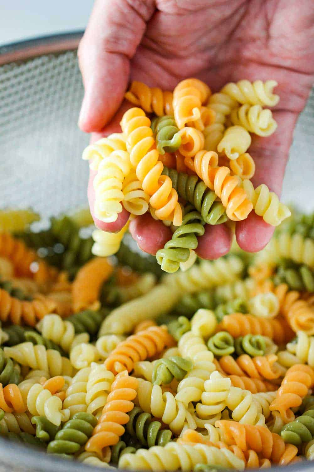 A hand holding tricolor cooked rotini pasta.
