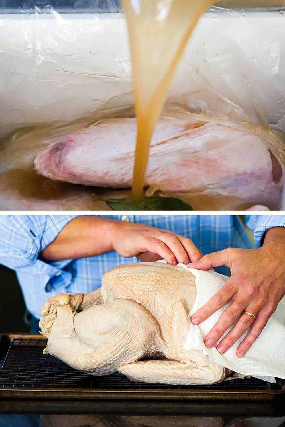 Brine pouring onto a fresh turkey in a brine bag in a cooler and then a person patting the turkey dry with paper towels.