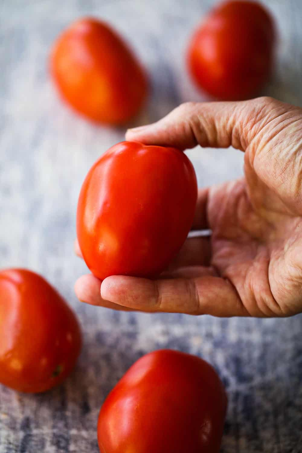 A hand holding a ripe roma tomato above a scattering of other roma tomatoes.